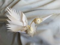Les oiseaux du ciel vont-ils sur l'eau? Oiseau navigateur